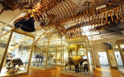 The 30 Most Amazing Higher Ed Natural History Museums